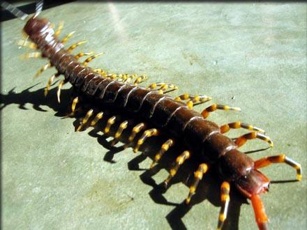 The UnMuseum - World's Biggest Bugs