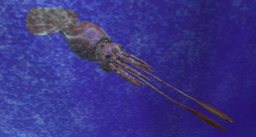 The Colossal Squid is thought