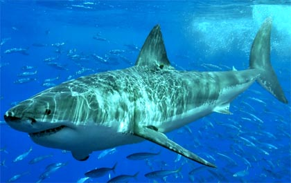 The UnMuseum - Rogue Shark! The Jersey Shore Attacks of 1916